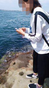 海の生物いるかな?